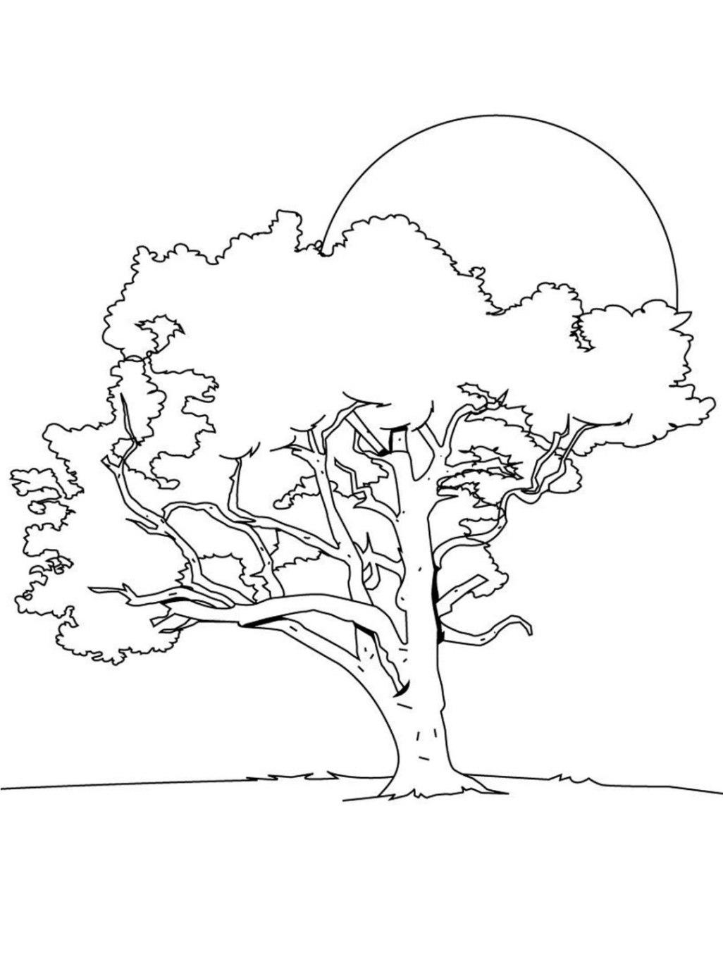 Malvorlagen zum Drucken Ausmalbild Baum kostenlos 3