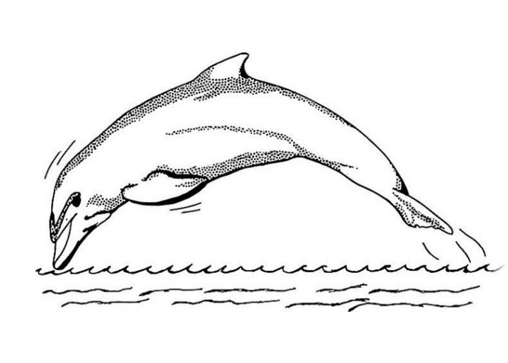 Ausmalbild Delphine kostenlos 1