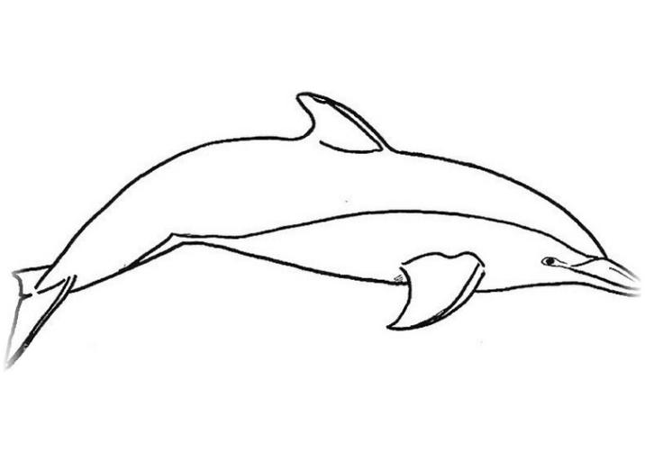 Ausmalbild Delphine kostenlos 3