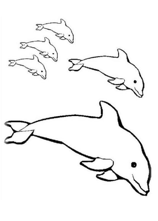 Ausmalbild Delphine kostenlos 4