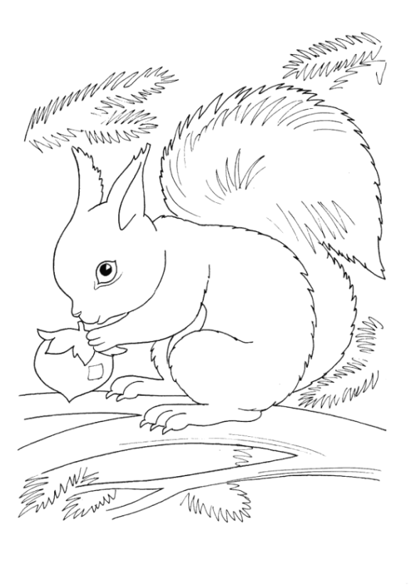 Malvorlagen zum Drucken Ausmalbild Eichhörnchen kostenlos 1
