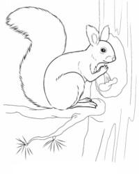 Ausmalbilder Von Eichhörnchen Kostenlos Zum Ausdrucken