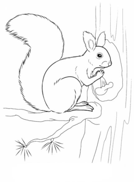 Malvorlagen Zum Drucken Ausmalbild Eichhörnchen Kostenlos 2