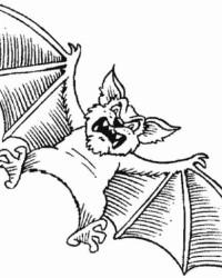 Ausmalbild Fledermaus kostenlos 3