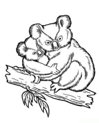 Ausmalbilder Von Koala Kostenlos Zum Ausdrucken