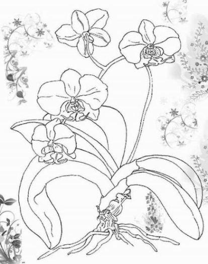 Malvorlagen zum Drucken Ausmalbild Orchidee kostenlos 1