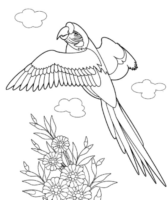 Ungewöhnlich Malvorlagen Von Papageien Ideen - Ideen färben ...