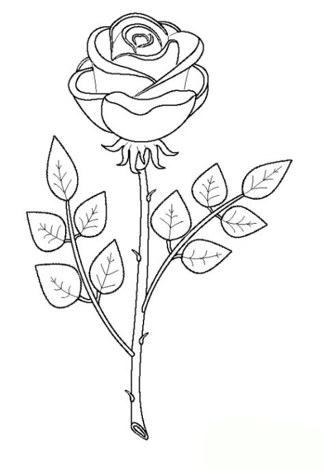 Malvorlagen Zum Drucken Ausmalbild Rose Kostenlos 1
