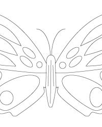 Ausmalbild Schmetterling kostenlos 4