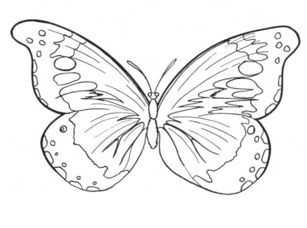 Ausmalbild Schmetterling kostenlos 5