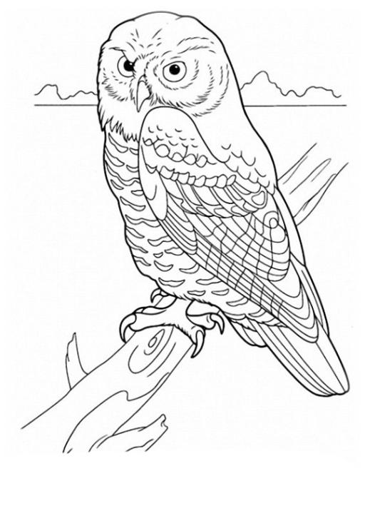 Ausmalbild Vögel kostenlos 1