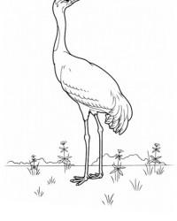Ausmalbild Vögel kostenlos 2