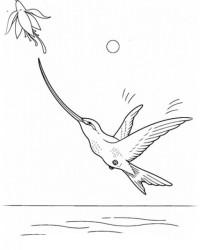 Ausmalbild Vögel kostenlos 4
