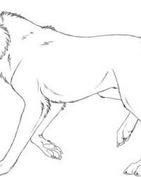 Ausmalbilder Von Wolf Kostenlos Zum Ausdrucken