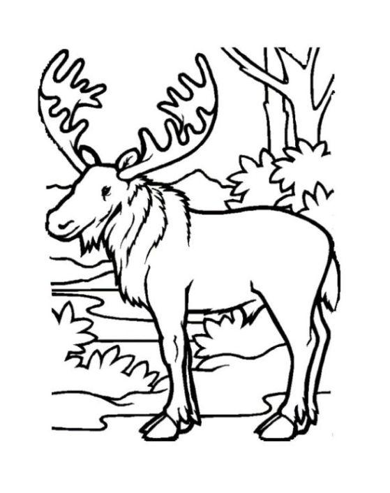 Malvorlagen zum Drucken Ausmalbild elch kostenlos 3