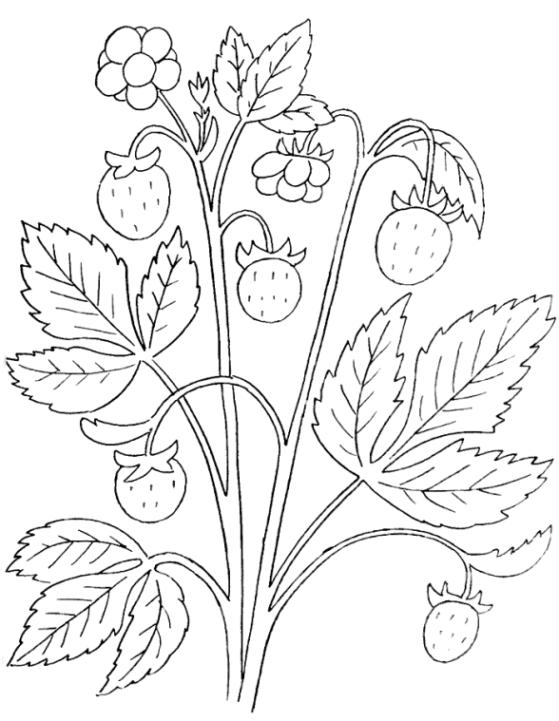 Malvorlagen Zum Drucken Ausmalbild Erdbeere Kostenlos 2