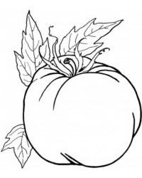 ausmalbilder von obst und gemüse kostenlos zum ausdrucken