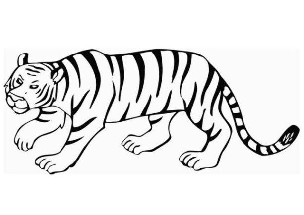 malvorlagen zum drucken ausmalbild tiger kostenlos 3