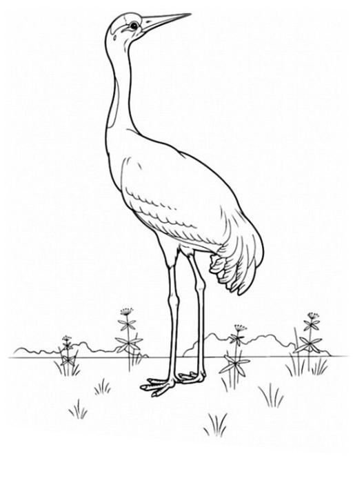 malvorlagen zum drucken ausmalbild vögel kostenlos 2
