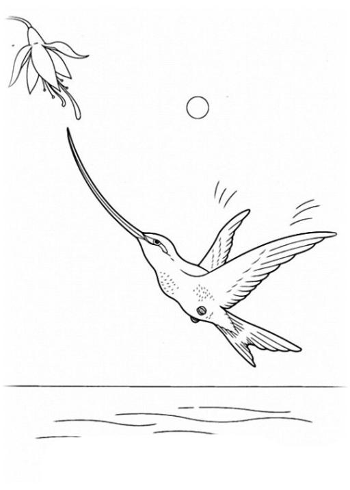 malvorlagen zum drucken ausmalbild vögel kostenlos 4